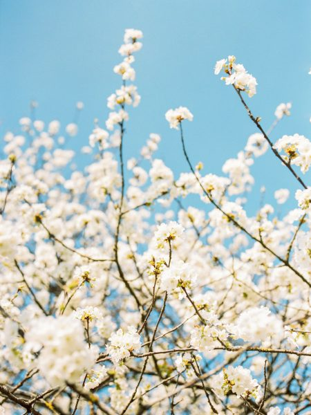 Loire-Valley-Spring-Flowers